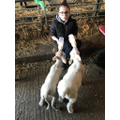 Poppy in 5Y has been helping with orphaned lambs.