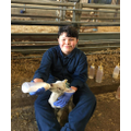 Feeding the baby lambs.