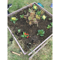 In school pupils have been doing some planting.