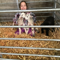 Erin from 6W doing all things sheep!