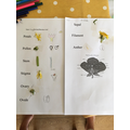 Maisie has been looking closely at flowers.