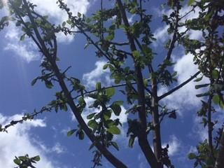 A glimpse of blue sky between the branches