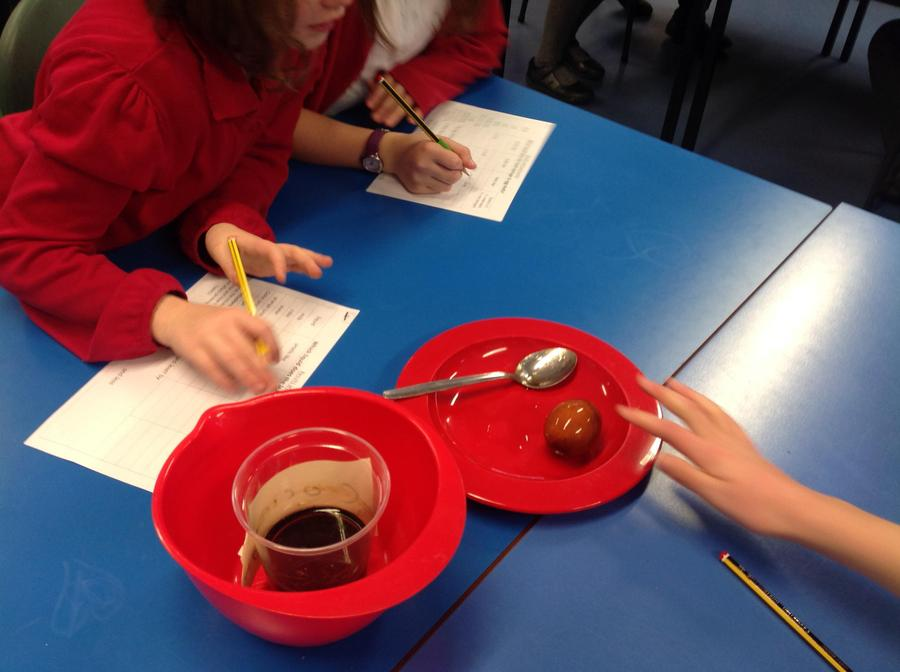 We recorded our observations of the eggshells