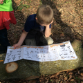 Identifying Woodland Creatures