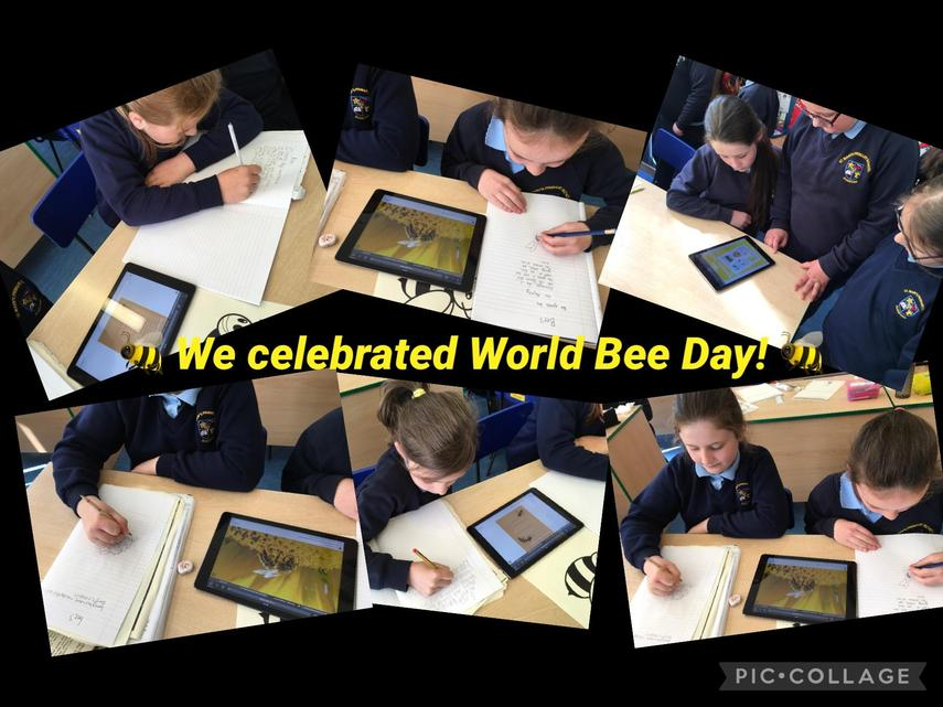 P5/P6: We researched the importance of bees! 🐝