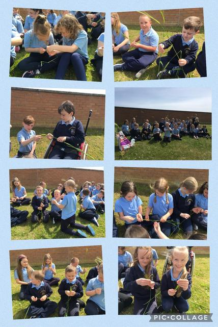 P3/P4 learned about barley growth and development