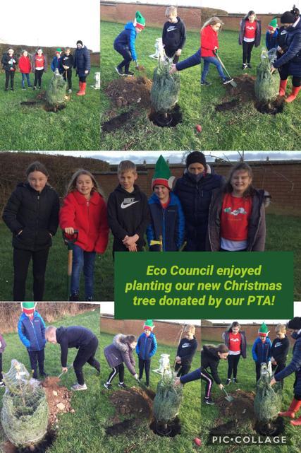 Biodiversity: Tree Planting