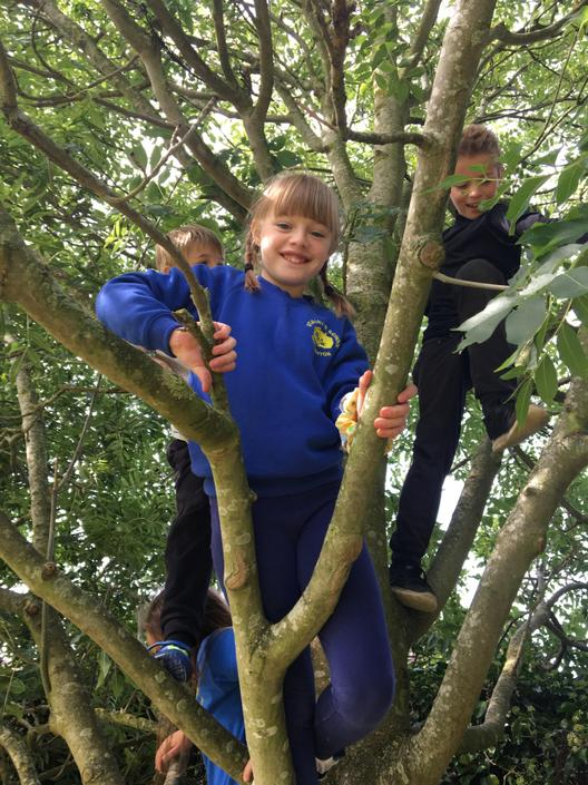 Climbing trees on the field.