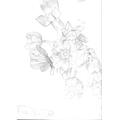 Billie's Super Sketching of flowers!