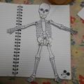 Manny's Superb Skeleton!