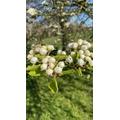 Blossom, taken by Marla