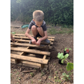 Austin's Planting