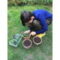 Oscar gardening
