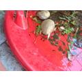 Samuel's tadpoles
