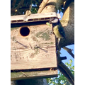 Austin's bird box