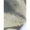 Sam's tadpoles