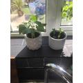 Billy's plants