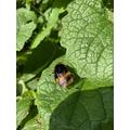 Bee, taken by Marla.