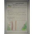 Maya's research about birds