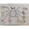 Bethany's bugs