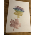 Mabel's leaf rubbings