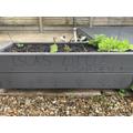 Isla has been growing vegetables.