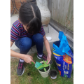 Bethany re-potting her sunflower.