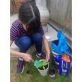 Bethany re-potting her sunflower.