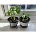 Bertie's plants