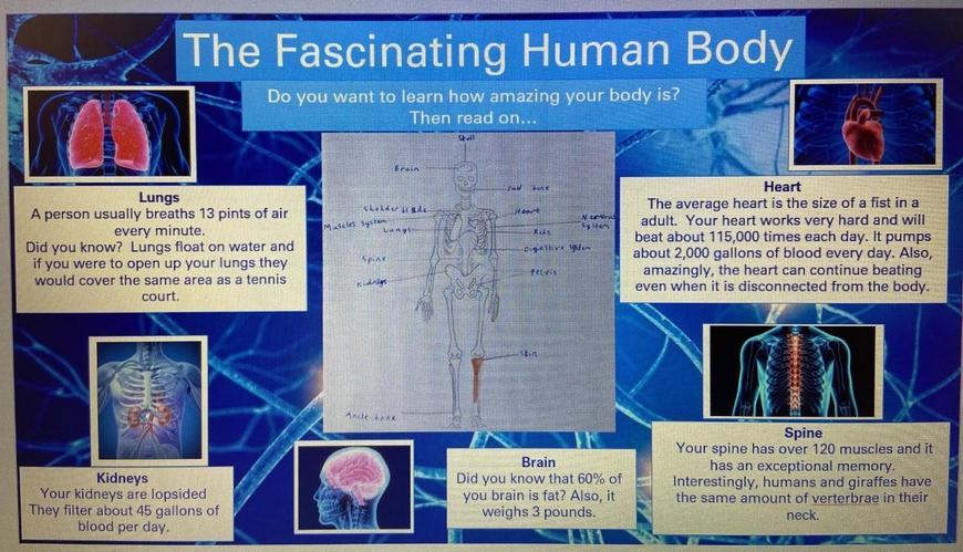 Sofia's Report on the Human Body