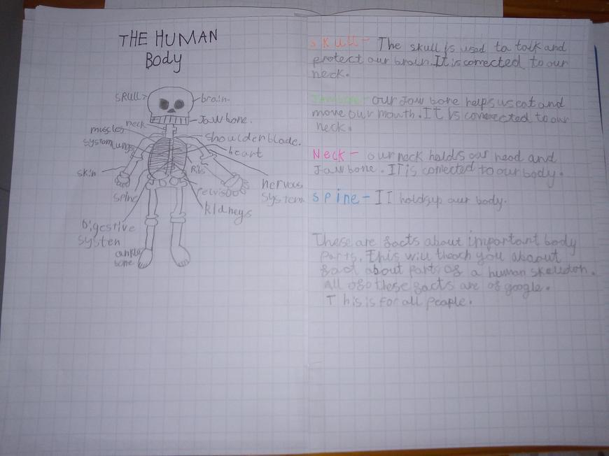Jakub's Report on the Human Body