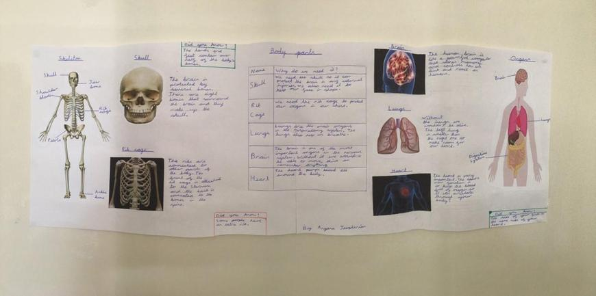 Aryana's Report on the Human Body
