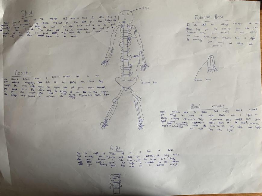 Alexis's Report on the Human Body