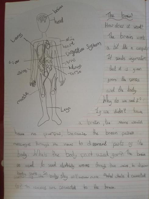 Grace's report on the Human Body