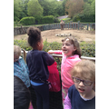 Having Fun at the Zoo.