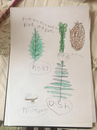 Woodland Plants by Isabella