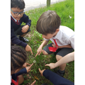 Exploring Science (Plants) at the Common