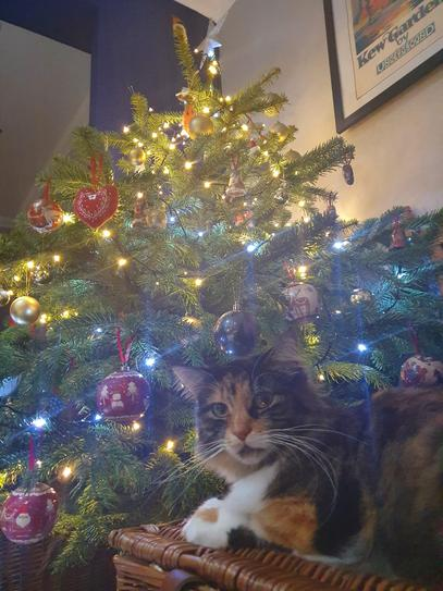 Happy New Year!  From Whiskey the Christmas cat
