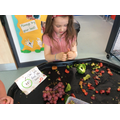 We are looking for fruit  seeds. Can you find any?