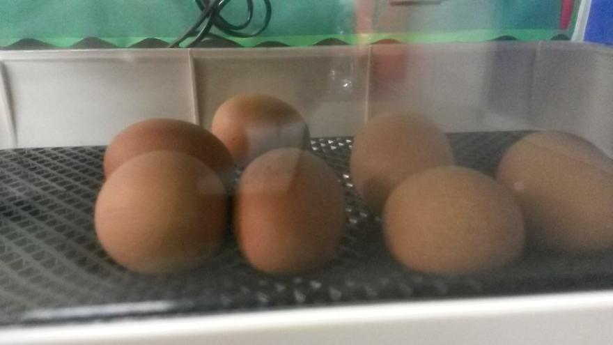 Our 7 eggs have arrived in Class 5