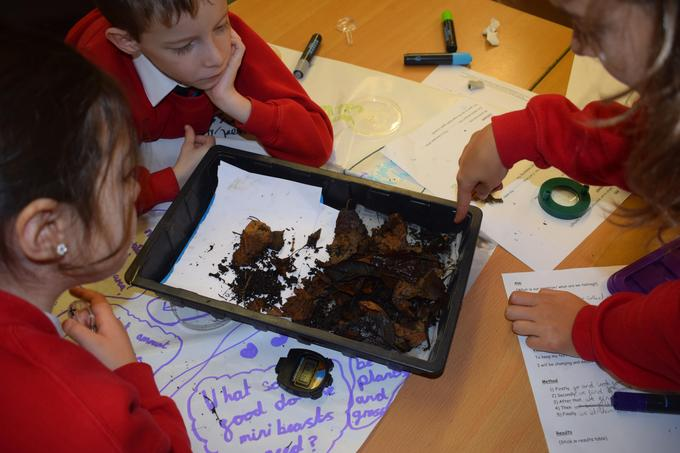 Observing the movement of the woodlice.