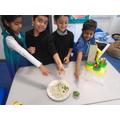 We chopped okra!