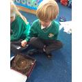 Looking at a Blackbirds Nest