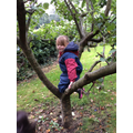 Climbing trees as we pick apples