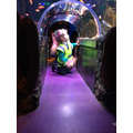 Visiting Manchester Sealife Centre