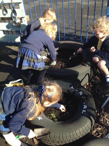 Observing seasonal change- planting spring bulbs