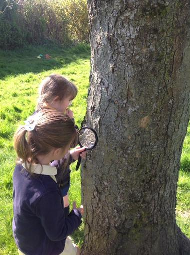 Discovering real creatures on bark