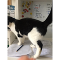 Holly's cat helping out with home schooling!