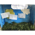 Photosynthesis by Lucas Y2