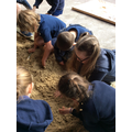 Stone Age Dig